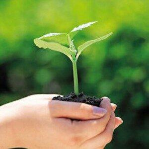 Abertas inscrições para curso de Perícia Ambiental