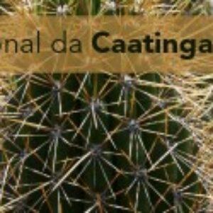 Crea-PE celebra Dia Nacional da Caatinga