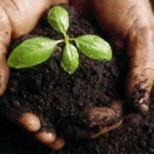 Crea-PE comemora Dia Mundial do Agrônomo