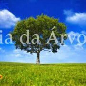 Hoje é comemorado o Dia da Árvore