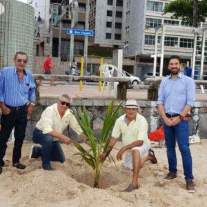 AEAPE comemora Dia do Engenheiro Agrônomo com plantio de coqueiros na praia de Boa Viagem