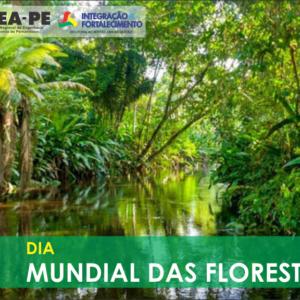 21 de março, Dia Mundial das Florestas